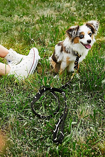 King of the Jungle Leash
