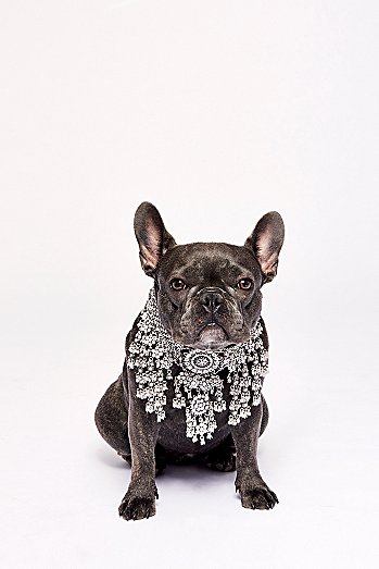 Apollo Statement Crystal Collar