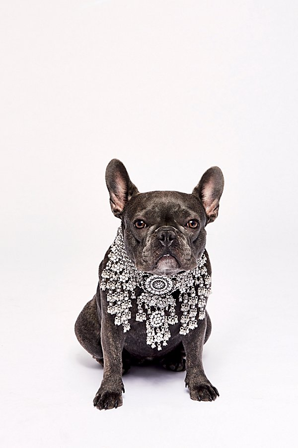 Slide View 4: Apollo Statement Crystal Collar